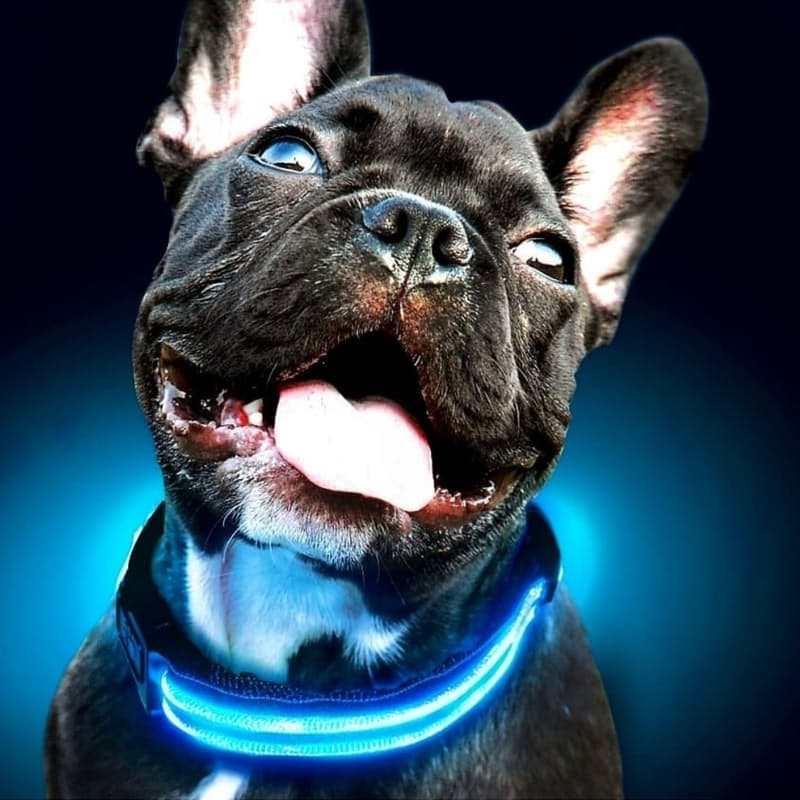Rechargeable LED Safety Collar and Leash