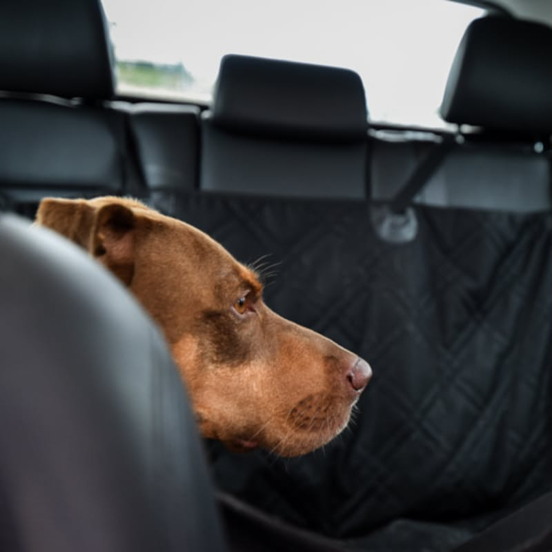 Dog Seat Covers For Cars