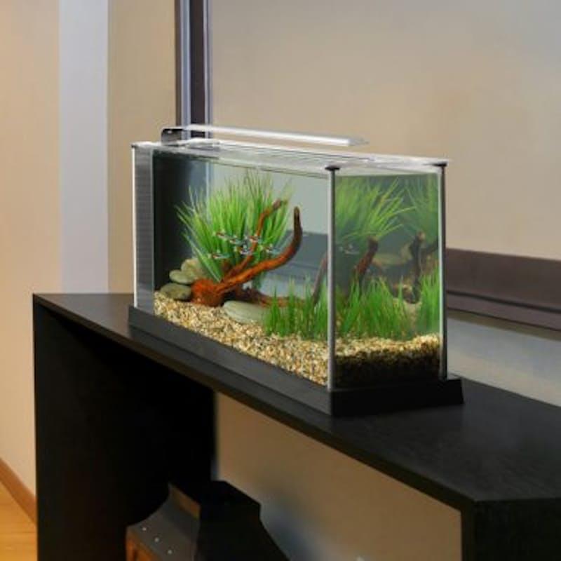 19L Spec 5 Glass Aquarium
