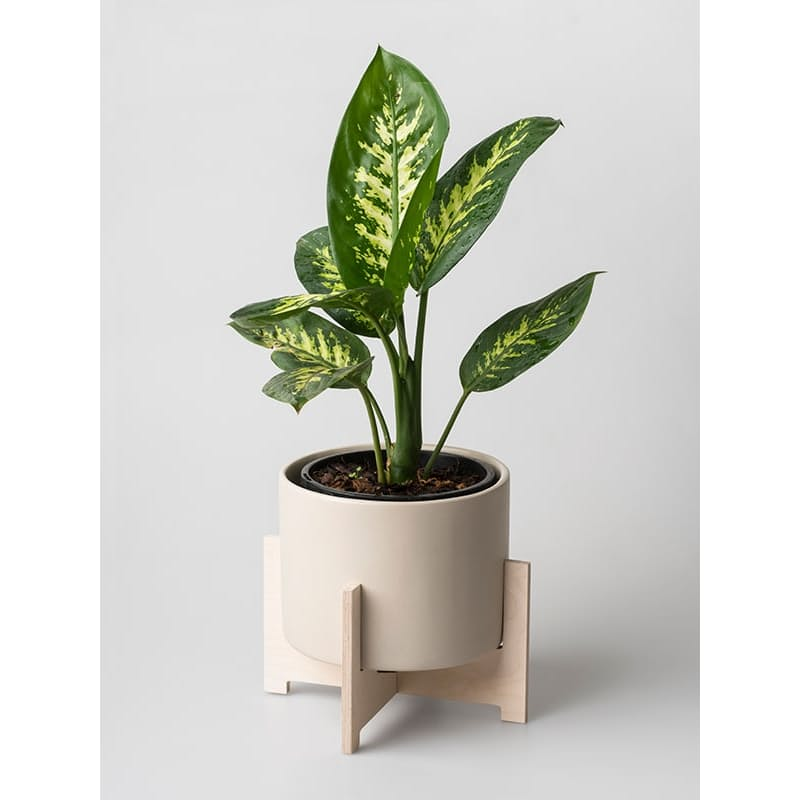 Cango or Bloukrans Plant Holders with Ceramic Pots