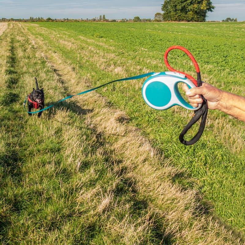 5 Meter Retractable Dog Leash